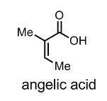 angelic acid.jpg